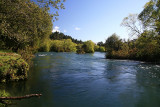 Waikato River, Reids Farm, near Taupo.