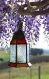 Lantern  and Wisteria Mount View Cottage.