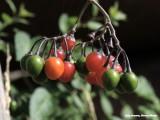 Vruchten langs het pad