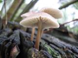 Paddestoelen (mushrooms)