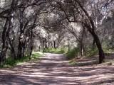 Peaceful road...