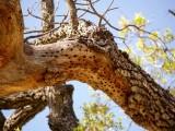 Wood pecker tree
