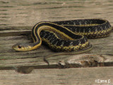 Amphibians, snakes, marine mammals