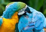 Jarong Bird Park