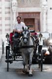 Verona Horse & Buggy