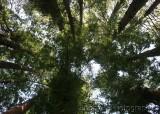 30003 Muirwood Canopy.jpg