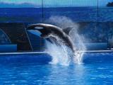 Sea World 2009
