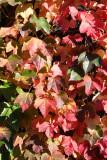 Week 108 (10/6-10/12) - Autumnal London