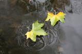 Week 109 (10/13-10/19) - Autumnal Hampstead Heath