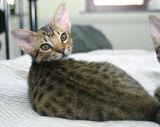 Morritz 12 weeks old