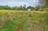 298, Marshlands Conservancy, Rye