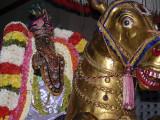 Sri Parthasarathi on Gudirai vahanam - Vijayadasami purappadu2.jpg
