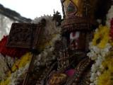 MM sattrumarai close up - morning2.jpg