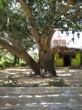 Udhbhava Sthanam  (Arasamaram )