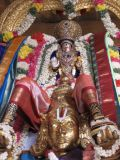 Narasimhar in Garuda sevai.JPG