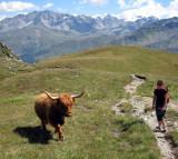 Highland cow in Switzerland !