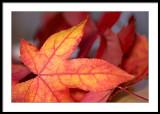 Fallen leaves..