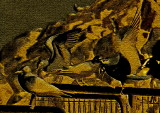 The birds Brass Etching