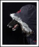 Undercover K9