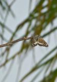 butterflykisses2.jpg