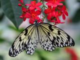 Butterfly at Callaway Gardens
