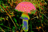 'Shroom in the Field of Imagination
