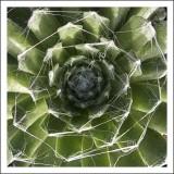 Spider Plant?