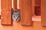 Kitten in the Fort