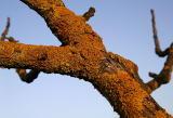 Crusty Sunset Branch