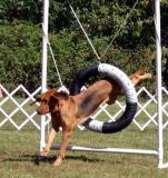 Agility Bloodhound