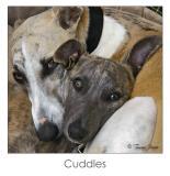 Cuddles by Tamara