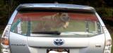2012 Prius V window screen