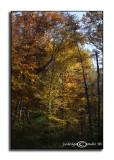 Fall Treasures VII