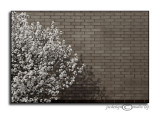 Spring TexturesMarch 10