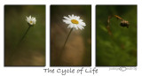 Cycle of LifeAugust 11