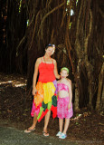 A giant banyan tree, Aitutaki