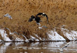 Farmington Bay Eagles