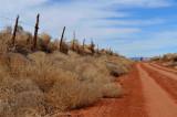 Gooseberry Mesa road