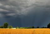 Anti Solar Rays over Wheat Field