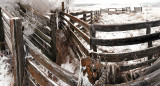 Frozen Fog on Cattle Chute