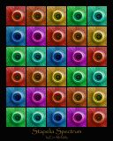 Stapelia Spectrum