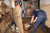 07/14/2010 Horse Rescue Hanson MA