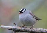 Oiseaux Octobre-Novembre  2012