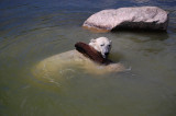 Isbjørne-fitness