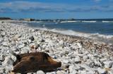 'Træpindsvin' ved Vigsø