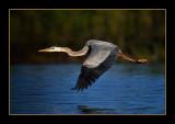 Wildlife of Long Lake