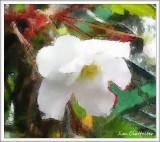Alice's Begonia by Jim Clatfeller - October 2010