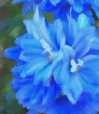 Blue Flowers by Tana - October, 2012