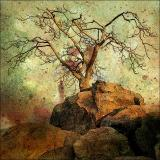 Lonesome Tree by Carol Skinner - April 2006