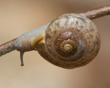 Snail and Twig